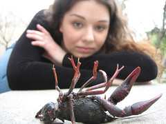 Death of the Crayfish