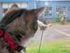 (cort211) Tags: window cat outside catsandwindows