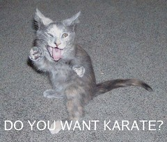 Karate Kittie