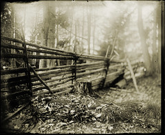 To keep them out (BosseB) Tags: forest fence smland 4x5 largeformat se1 glassplate dryplate icahybrid fivestarsgallery artlibre