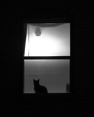 Watching.... Waiting... ('SeraphimC) Tags: light blackandwhite bw window monochrome animals silhouette delete10 tag3 taggedout night cat canon blackcat delete9 dark delete5 photography 350d rebel mono delete2 blackwhite feline waiting tag2 sill tag1 looking nocturnal zoom delete6 delete7 seat watching kitty save3 ears delete8 delete3 save7 monochromatic delete delete4 save save2 bn save4 photograph onecolor save5 sat grayscale rebelxt dslr save6 75300 koshka kissa peering lifeforms monochromaticity earthdwellers livingbeings calebcoppola thisrawksforportfolio