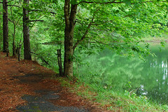 Mountain Lake. (BamaWester) Tags: road trees brown reflection green nature water outside outdoors pond path alabama bamawester napg