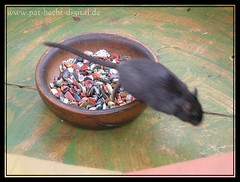 Mouse Jump (# -  * - + P A T T Y + - * - #) Tags: middleages medival cmc mittelalter medieaval mittelaltermarkt spectaculum lovephotography commentonmycuteness medieavalfair mittelatermarkt
