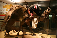 ARAB COURIER ATTACKED BY LIONS (happy via) Tags: lion camel arab courier barbary