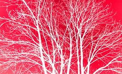 Study in Red - for Jules (Dave - aka Emptybelly) Tags: trees red sky art smile manipulated wow ilovenature friendship searchthebest empty explore belly maze jules pal mate psychotic challenge encourage kiss2 1on1 goodday encouragement payitforward givemefive photoplus dgr yourworld thecontinuum 2for2 kiss3 mateship xgivemefive kiss1 lovephotography emptybelly gtaggroup kiss5 obsessiveflickrites amillionphotos