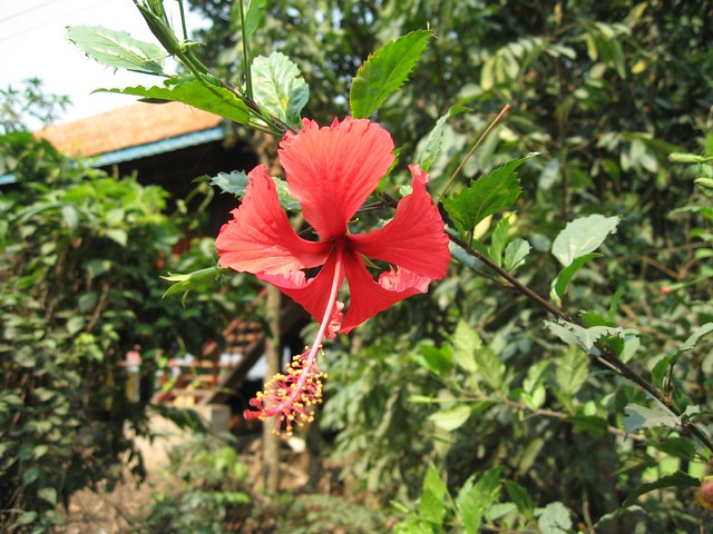 Flowers of Indochina