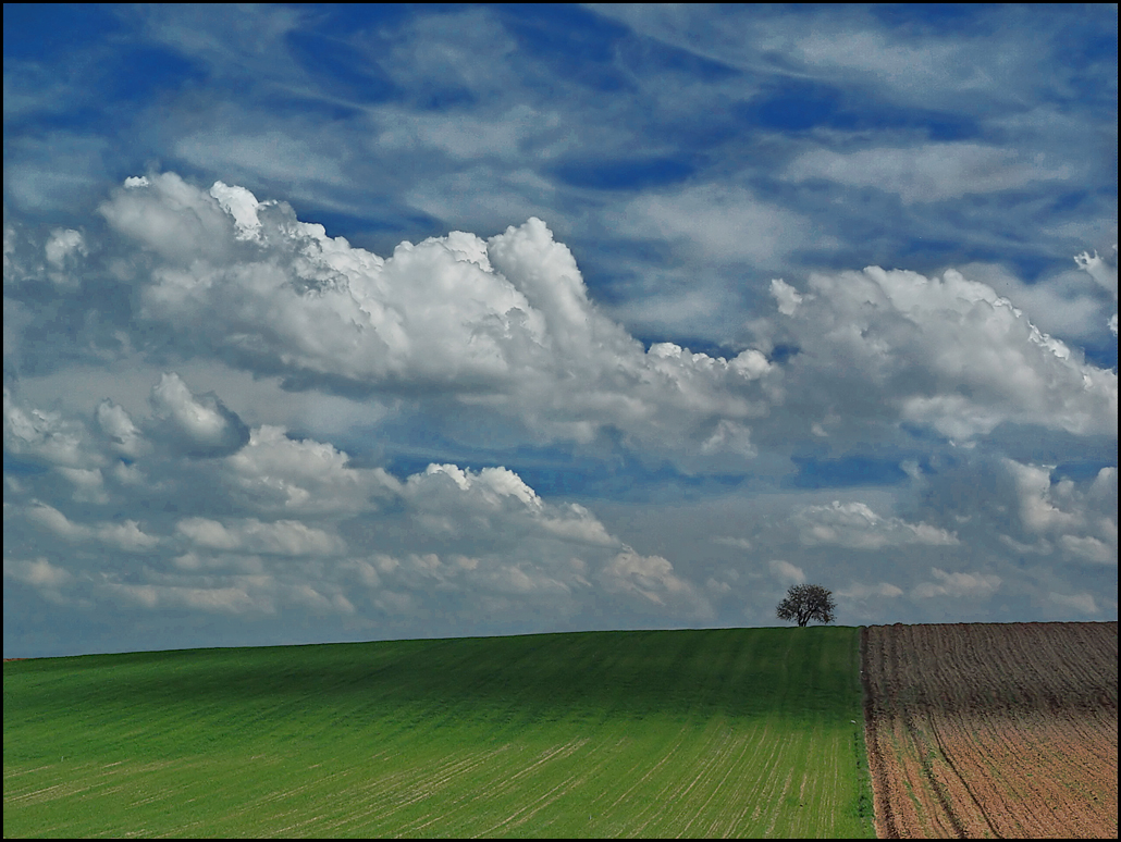 Photo de Castille-Leon n°2. Paysage de campagne en Castille-Leon (Alaejos)
