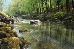 River Llugwy (Stu Worrall Photography) Tags: wood longexposure trees topf25 water wales river landscape spring bravo rocks stream long exposure quality north 100v10f foam waterblur be