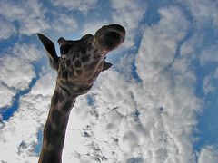 Giraffe (Marc_714) Tags: ranch sky nature animals taggedout clouds flickr tag2 tag1 northcarolina sparkle marc carolina giraffe mooresville reloaded 1on1 714 0714 cher0213 marc714