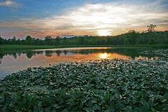 sunset on the lilypads (jaki good miller) Tags: sunset landscape interestingness pond explore exploreinterestingness lilypads jakigood pikecounty continuum pondlife top500 explorepage explored specland explorepages skiesandscapes