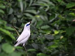 At the Aviary in Hong Kong (` Toshio ') Tags: china bird hongkong asia aviary hongkongpark kiss2 toshio kiss3 kiss1 kiss5 thewonderfulworldofbirds