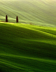 La Crete IV (Adam Clutterbuck) Tags: italy green landscape spring bravo 300d tuscany cypress siena toscana canoneos300d rolling oe greengage 92points adamclutterbuck lacrete winnerflickrsweekly50contest showinrecentset openedition