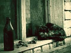 Solitude (AIeksandra) Tags: black look cat eyes alone loneliness sad serbia forgotten balkans deserted