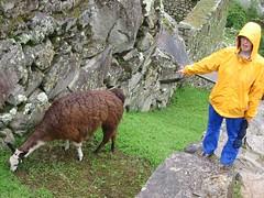 Machu Picchu 2568