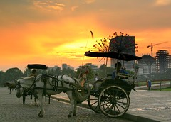 jakarta sunset (chillntravel) Tags: travel sunset horse indonesia interestingness interesting southeastasia jakarta topv777 topv666 monas topf30 delman