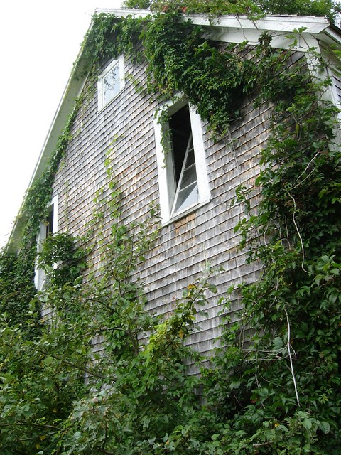 Vine covered building - Annapolis Royal Historic Gardens