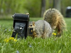 Voigtlander  squirrel