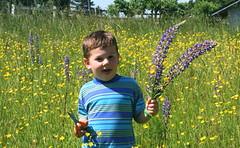 Pure Joy (jodi_tripp) Tags: tag3 taggedout vancouver tag2 tag1 charlie wa wildflowers allrightsreserved saywa joditripp mynewfavoritegroup wwwjoditrippcom photographybyjodtripp joditrippcom
