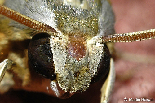 Moth Close-Up