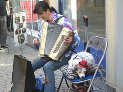 Dogs of Germany: Street Musician
