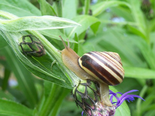 Snail explores the garden