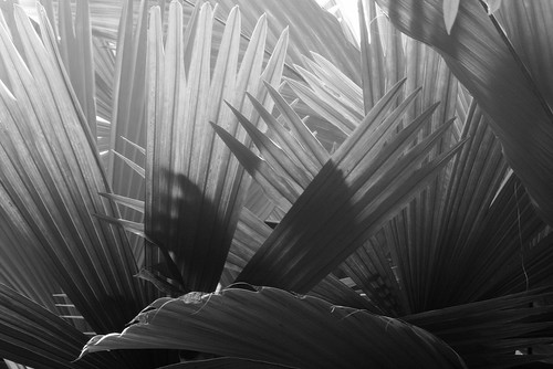 Backlit Palms