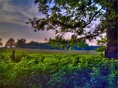 (sandal light) Tags: sky tree field nettles hdr highdynamicrange photomatix tonemapped tonemap