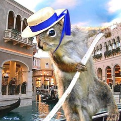 Gondolier (Terry_Lea) Tags: squirrel squirrels photoshopfun tbas