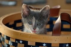deranged kitten in a basket
