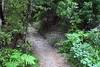 032406_029_AbelTasman_OnetahutiToBarkBay (babette ross) Tags: newzealand nz southisland abeltasmannationalpark