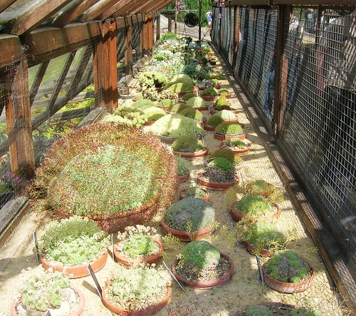 Alpine House at Royal Botanic Garden Edinburgh - flckr - brewbooks