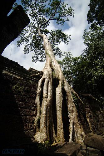 @ Angkor