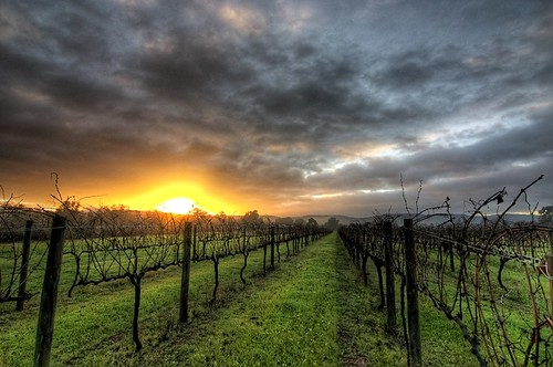 HDR - vineyard sunrise