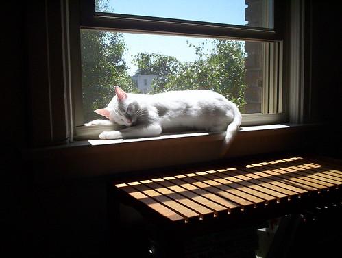 Solar Cat