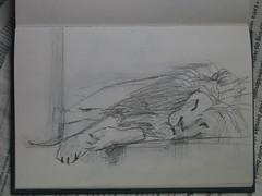 Leeuw (simongroenewolt) Tags: sketch drawing lion dier artis tekening leeuw schets