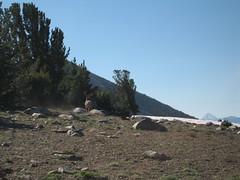IMG_2278 (derbilly) Tags: california backpacking sierranevada anseladamswilderness inyonationalforest
