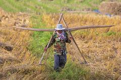 ChiangMai_8770 (JCS75) Tags: asia asie canon colorimage thailand thailande chiangmai