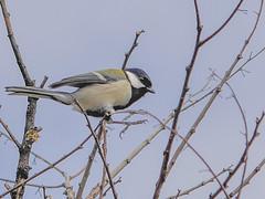 161211_GX7_1450896 (kuad9) Tags: bird