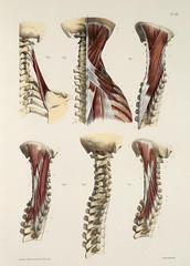 Anglų lietuvių žodynas. Žodis anatomy reiškia n anatomija lietuviškai.