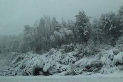 Śnieżyca | Snowy day