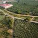 Plantação de nopales, cactos para comer