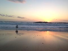 2015-01-24 06.11.04 (gaby.florit) Tags: enero australiano