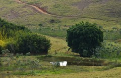O bambu refletido (Mrcia Valle) Tags: trees minasgerais verde green nature water gua brasil rural landscape lago pond nikon interior natureza paisagem bamboo tropical lagoa bambu rvores roa braziliannature zonadamata naturezabrasileira d5100 mrciavalle