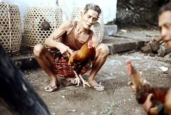 27-262 (ndpa / s. lundeen, archivist) Tags: people bali man color men bird film birds 35mm indonesia basket sandals nick cage cock squat arena dirt southpacific handlers baskets rooster cocks 1970s 27 1972 handler roosters indonesian crouch crouching cockfight gamecock squatting gamecocks cages dewolf oceania pacificislands cockfighting nickdewolf photographbynickdewolf cockfightingarena reel27 cockfightarena