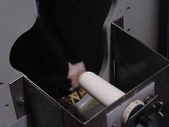 Eppinga farmhouse, Nijemirdum (Alta alatis patent) Tags: cows artificial calf friesland teat frysln eppinga ffboeren