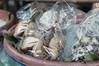 bird /market / July / 2015 / Khon Kaen, Thailand (gudiodotdotdot) Tags: thailand nikon market khonkaen thaifood d5000 thaiisan ตลาดแลงคำไฮ
