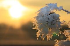 Frozen leaf (Bayerwaldteam) Tags: sonne sonnenaufgang sunrise eis ice eiskristalle crystal winter
