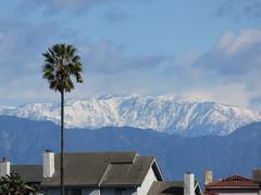 Snow beyond the Palm Tree (Kelson) Tags: losangeles hahnpark kennethhahnstaterecreationarea california sangabrielmountains snow palmtree