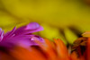 ECS_0774 (Deepak Kaw) Tags: drop colours color composition contrast bokeh beautiful bright dof depthoffield macro closeup nikon tamron 90mm art artistic flower india reflections beauty
