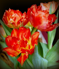Cheerful Tulips (swetlanahasenjäger) Tags: saariysqualitypictures tulpen ngc coth coth5 flowerarebeautiful mixofflowers excellentsflowers thebestofmimamorsgroups contactgroups natureselegantshots